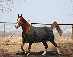 Horse Blanket Cleaning